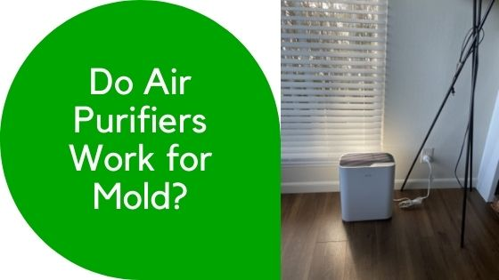 Do Air Purifiers Work for Mold